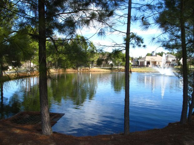 Govenors Park Pond, SW bank