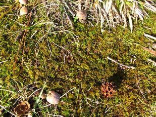 Moss and Seedpods