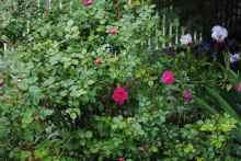 Moffat Garden-10