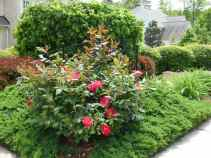 Smith Garden-2