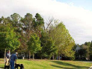 Dead Oak in Southern Copse of Meadow Park