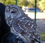 Piedmont Wildlife Center-3