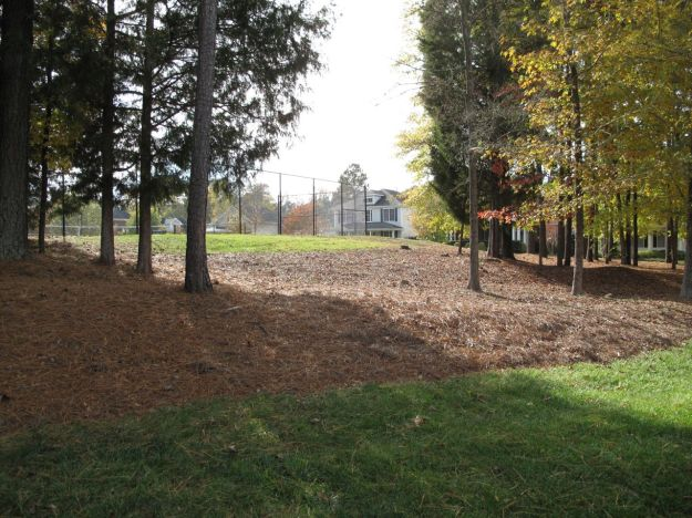 Pine Grove at north end of Village Park Drive will come alive with daffodils in spring.