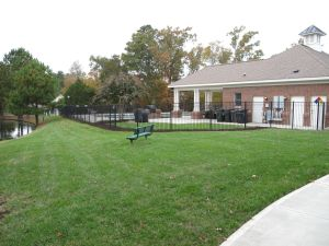 Before View Along Fence At Pool 2014-11-04